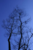 Bare Branches. After sunset royalty free stock photo