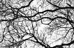 Bare Branches 2. A black-and-white pattern of intertwined bare branches Stock Photos