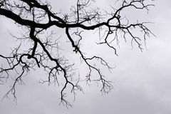Bare branches. Against cloudy sky Royalty Free Stock Photos