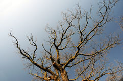 Bare branches Royalty Free Stock Photos
