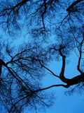 Bare branches against blue skies