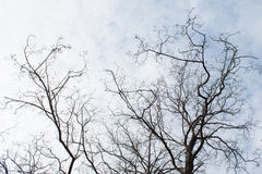 Bare branches Stock Image