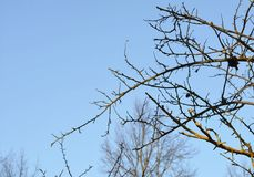Bare branches against the sky Stock Photography