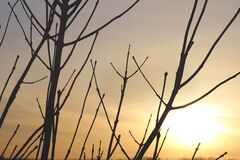 Bare branches against sunset Royalty Free Stock Photo