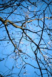 Bare Branches on a Bright Fall Day Royalty Free Stock Photos
