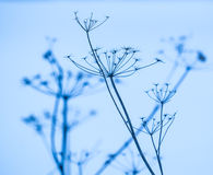 Bare branches of a bush in snow Royalty Free Stock Images