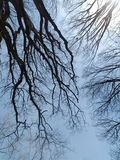 Bare Branches On A Cold Winter Morning, Landscape, Wintry Scene royalty free stock images