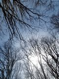 Bare Branches On A Cold Winter Morning, Landscape, Wintry Scene stock photography
