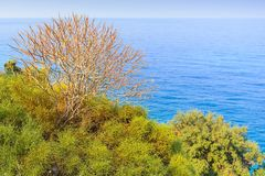 Bare branches of a dry tree against the background of the sea stock image