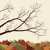 Bare Branches with Fallen Leaves. Autumn Background Royalty Free Stock Photo
