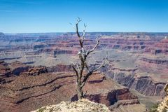 Bare Branches at the Grand Canyon stock images