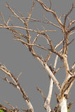 Bare branches gray background. Stock Photography