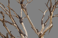 Bare branches gray background. Stock Photo