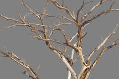 Bare branches gray background. Royalty Free Stock Image
