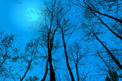 Bare branches at night Royalty Free Stock Image