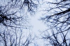 Bare Branches and Sky Stock Image