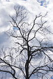 Bare branches, stormy sky Royalty Free Stock Photos