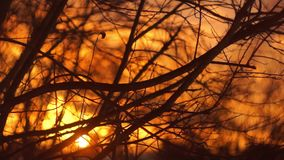 The Bare Branches at Sunset stock footage