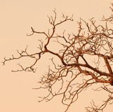 Bare branches of tree Stock Photography
