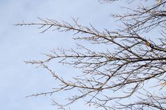 Bare branches of a tree against the morning sky.  Stock Photos