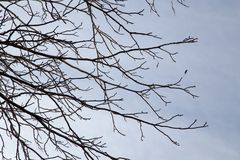 Bare branches of a tree against the morning sky.  Stock Images
