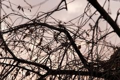 Bare branches of a tree at sunset Stock Photo