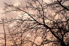 Bare branches of a tree at sunset Royalty Free Stock Photos