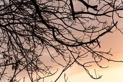 Bare branches of a tree at sunset Stock Photography