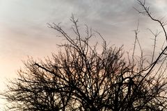 Bare branches of a tree at sunset Stock Image