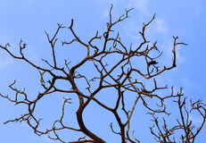 Bare branches of a tree Royalty Free Stock Image