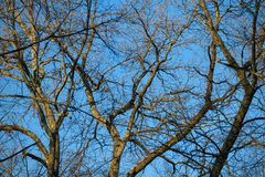Bare branches and tree trunks against a blue sky stock photography