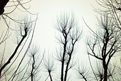 Bare branches of the trees Stock Images