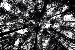 Bare branches of trees in black and white Royalty Free Stock Photo
