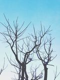 Bare branches. Bare trees and blue sky, bare branches Royalty Free Stock Photos