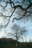 Bare branches in trees Stock Photos