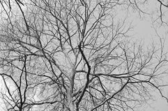Bare branches Royalty Free Stock Images