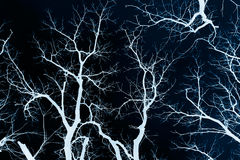 Bare branches. The bare branches of trees. Negative image Stock Photos