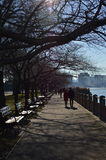 Bare branches of trees in sunny day in Hudson River Greenway Stock Photography