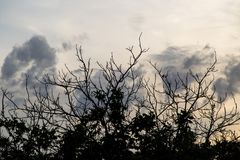 Bare branches of the trees on the sunset background.  Stock Photos