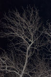 The bare branches Stock Photography