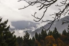Bare branches of a walnut tree with water drops in the rain stand out starkly against autumn foliage and misty mountains royalty free stock images
