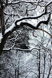 Bare branches in winter Royalty Free Stock Photography