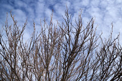 Bare branches in winter Stock Photography