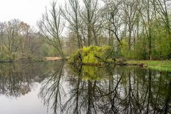 Bare and budding trees reflected in the lake. Picturesque image of bare and green budding trees reflected in the mirror smooth water surface of a natural pond in Stock Photography