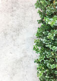 Bare cement wall with the fresh bush. Royalty Free Stock Photo