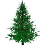 Bare Christmas tree Stock Photo
