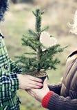 Bare Christmas tree Royalty Free Stock Photography