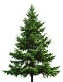 Bare Christmas tree. A green, bare Christmas tree ready to be decorated, isolated on white background stock image