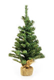 Bare Christmas tree without decoration Royalty Free Stock Photos
