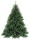Bare Christmas tree without decoration Royalty Free Stock Image